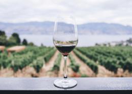 Wijn in pak