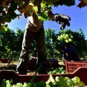 Witte Bordeaux wijn