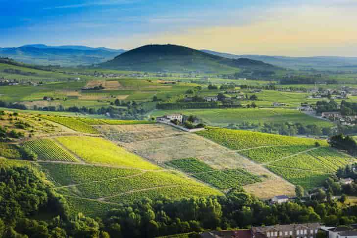 beaujolais wijn